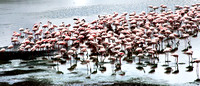 Flamingos in Arusha National Park